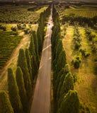 Cypressgränd med den lantliga landsvägen, Tuscany fotografering för bildbyråer