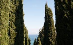 Cypressgränd på en bakgrund av havet Royaltyfria Bilder