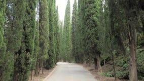 Cypressgränden i botaniska Tbilisi parkerar - Georgia stock video