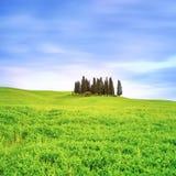 Cypressgrupp och lantligt landskap för fält i Orcia, San Quirico, Tuscany. Italien Arkivbild