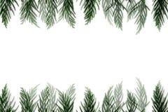 Cypressram royaltyfria bilder