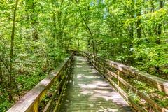 Cypressskog och träsk av den Congaree nationalparken i södra Caro royaltyfria bilder