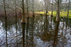 cypressswamp Arkivfoton