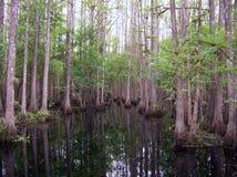 cypressswamp Royaltyfria Bilder