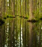 cypressswamp Royaltyfri Bild