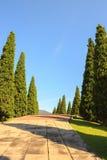 Cypressträd Arkivfoto