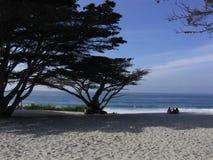 Cypressträd på en strand Arkivfoto