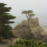 Cypressträd på kustlinjen arkivfoto