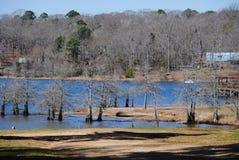 Cypressträd på sjön Arkivbilder