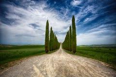 Cypressträd ror och en vit väg, lantligt landskap i val land för D Orcia nära Siena, Tuscany, Italien arkivbild