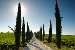 Cypressträdlinje väg i Tuscany arkivfoto