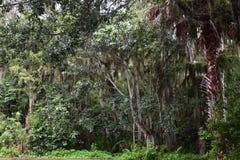 Cypressträsk Royaltyfri Fotografi