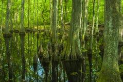 Cypressträsk, Natchez spår, ms Royaltyfria Bilder