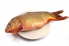 Cyprinus carpio Royalty Free Stock Image