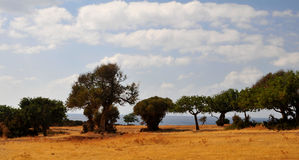 Cypriot subtropical coast. Trees and shrubs during summer drought in Cyprus coast Stock Photography