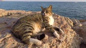 Cypriotische kat die bij zonsondergang dichtbij het overzees in Ayia Napa rusten stock footage