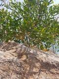 cyprus immagine stock libera da diritti