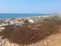 cyprus Photographie stock libre de droits