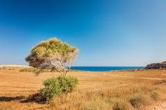 Cyprus Ayia Napa, Cape Greco peninsula, national forest park Stock Image