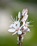 cyprus blommavinter Royaltyfria Foton