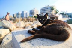 Cyprus cat. A very satisfied looking cat sits on the coast of the Mediterranean island of Cyprus. Larnaca, Mackenzie beach stock photo