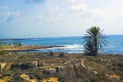 Cyprus Island sea coast landscape. Palm tree on rocky beach royalty free stock photo
