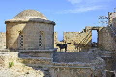 Cyprus, Kyrenia. Cyprus, cupola of Saint George chapel and dogs in fortress of Kyrenia aka Girne royalty free stock image