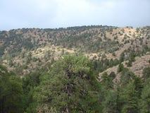 cyprus Montagnes de Troodos Panorama des for?ts sauvages de montagne ? une altitude de 1900 m?tres au-dessus de niveau de la mer photographie stock