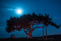 Cyprus old tree on a background of the night sky. Illuminated backlit moon. Cloud royalty free stock images