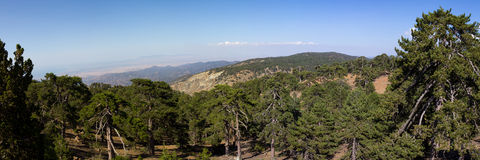 Cyprus. Panorama of mountain peaks and a growing black pine. The photo was taken at the island Kyprus. Panorama pieced together from multiple photos Royalty Free Stock Photos