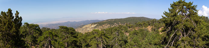 Cyprus. Panorama of mountain peaks and a growing black pine. Royalty Free Stock Image