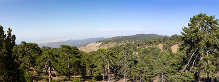 Cyprus. Panorama of mountain peaks and a growing black pine. Royalty Free Stock Photos