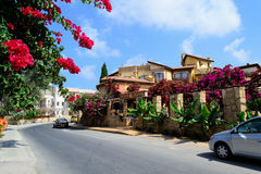 Cyprus Paphos Flowers on street. Royalty Free Stock Photo