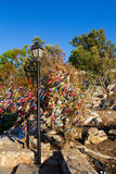 Cyprus. Protaras. Kind of a Cyprus tree. Stock Image