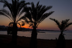 Cyprus. Protaras. View of palm trees and sea at sunset. Royalty Free Stock Images