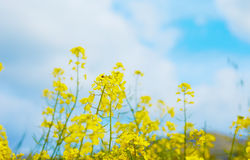 Cyprus in the spring Stock Photos