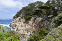 Cyprus trees on the coast. Beautiful cyprus tree in a cliff on the California coast Stock Photography