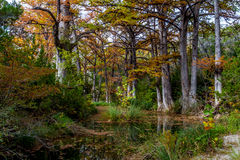 Cypress Trees on Hamilton Creek Stock Photo
