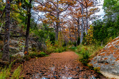Cypress Trees on Hamilton Creek Stock Photos