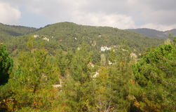 Cyprus village in mountains. Forest Stock Images
