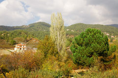 Cyprus village in mountains. Forest Stock Photo