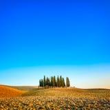 Cyprys grupa i śródpolny wiejski krajobraz w Orcia, San Quirico, Tuscany. Włochy Obrazy Stock
