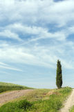 Cyprys na górze Toskańskiego wzgórza Fotografia Stock