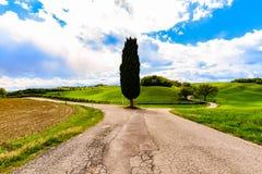 Cyprys w wsi ulicie w Tuscany Obrazy Royalty Free