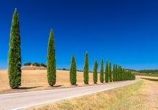 Cyprysowego drzewa aleja w Tuscany Obraz Royalty Free