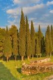 Cyprysowi drzewa Zdjęcia Stock
