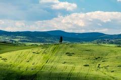 Cyprysowy drzewo samotnie przy wierzchołkiem af zielony wzgórze w countrysi Obrazy Stock