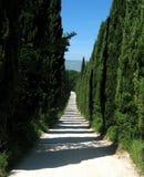 cyprysowy lane Zdjęcia Royalty Free