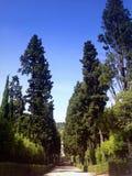 Cyprysowy parkway w Boboli uprawia ogródek w Florencja Obrazy Stock