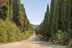 Cyprysowy pas ruchu w Bolgheri, Tuscany, Włochy Obraz Stock